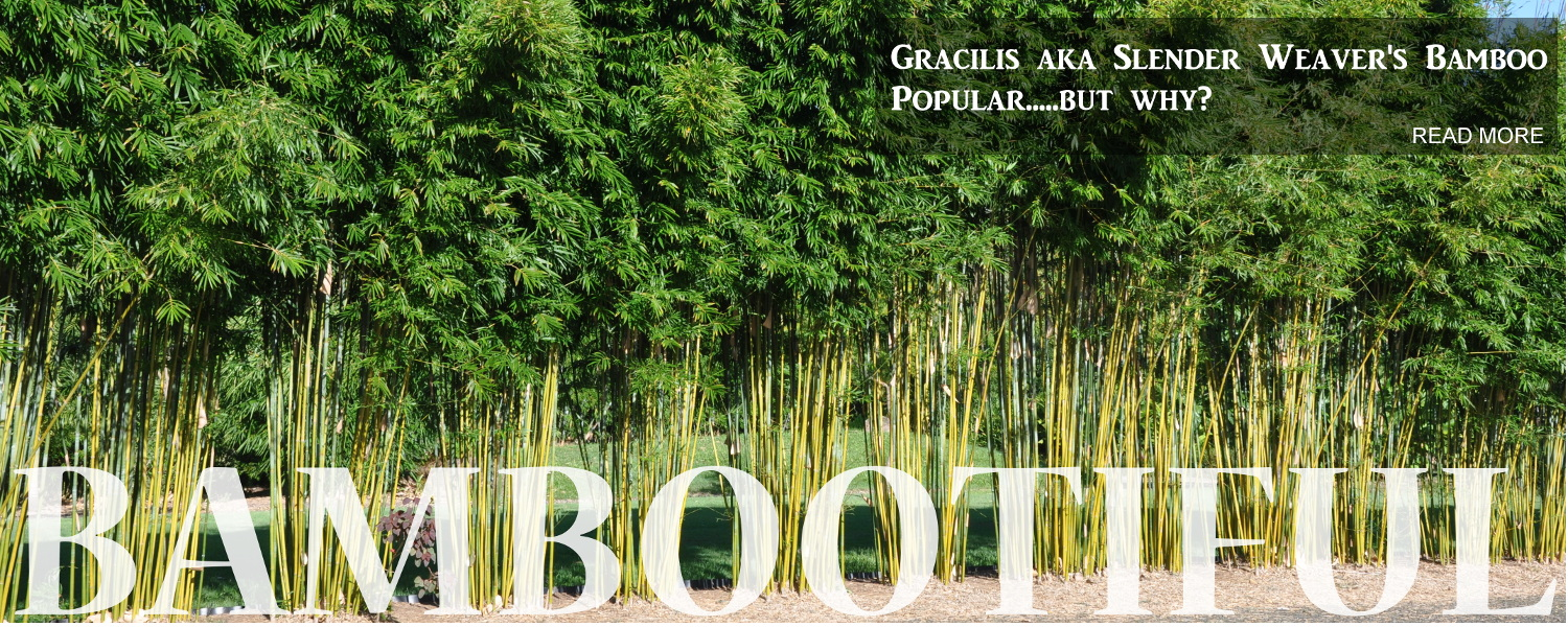 bamboo land nursery and parklands