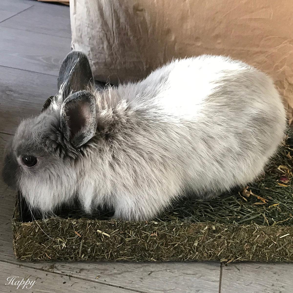 tapis a creuser pour lapins et rongeurs bamm paris