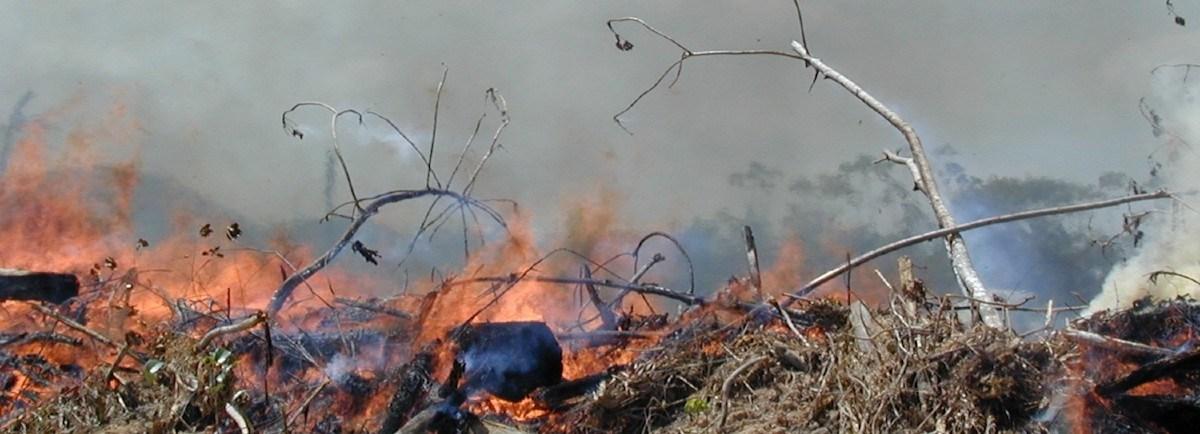 20200608-queimada-amazonia-1