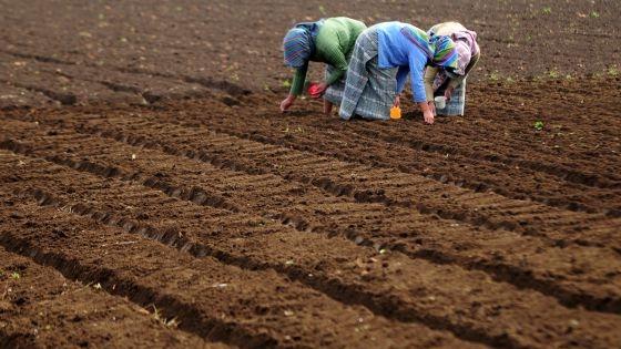 Resultado de imagen de Sudán del Sur tiene una de las zonas agrícolas más ricas
