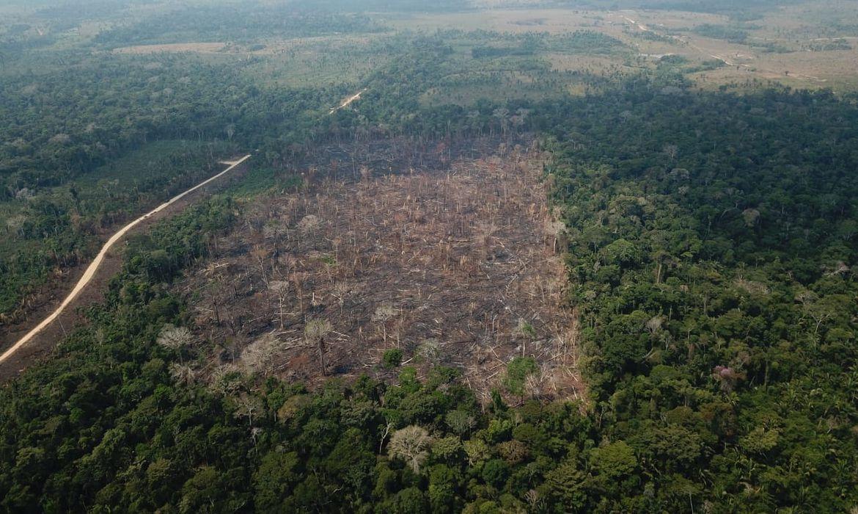 Desmatamento no Amazonas tem 76% de responsabilidade federal