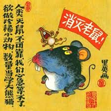 rat chine nouvelle