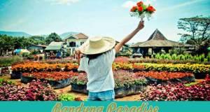 Taman Begonia Lembang Bandung yang Indah & Menarik