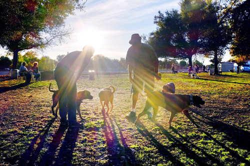 dog parks, socialization, socialisation