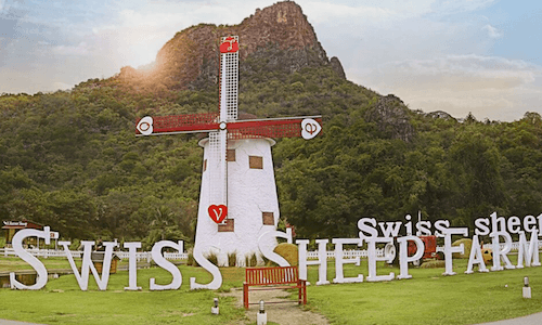 Swiss Sheep Farm
