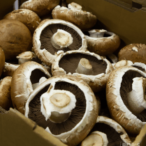 Fresh Pack of Portobello Mushrooms