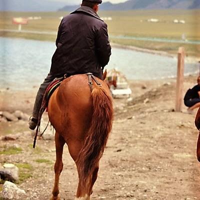 Un des nombreux cavaliers