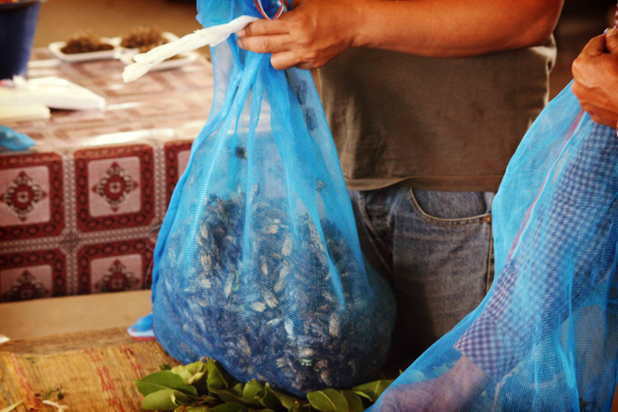 Grillons vivants sur le marché