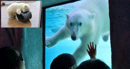 Baby Polar Bear Discovers The World With Videos Bangkok Post Learning