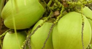 কোক ফানটা না খেয়ে ডাবের পানি খান দেখুন ডাবের পানির উপকার