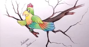 Parrot Drawing With Colour Bangla Viral