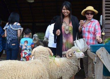 Tourist themed sheep Village, Sheep Achill Island, Ireland, Mayo