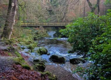 Tolymore Forest Park, Things to do in Northern Ireland Tourist Attractions