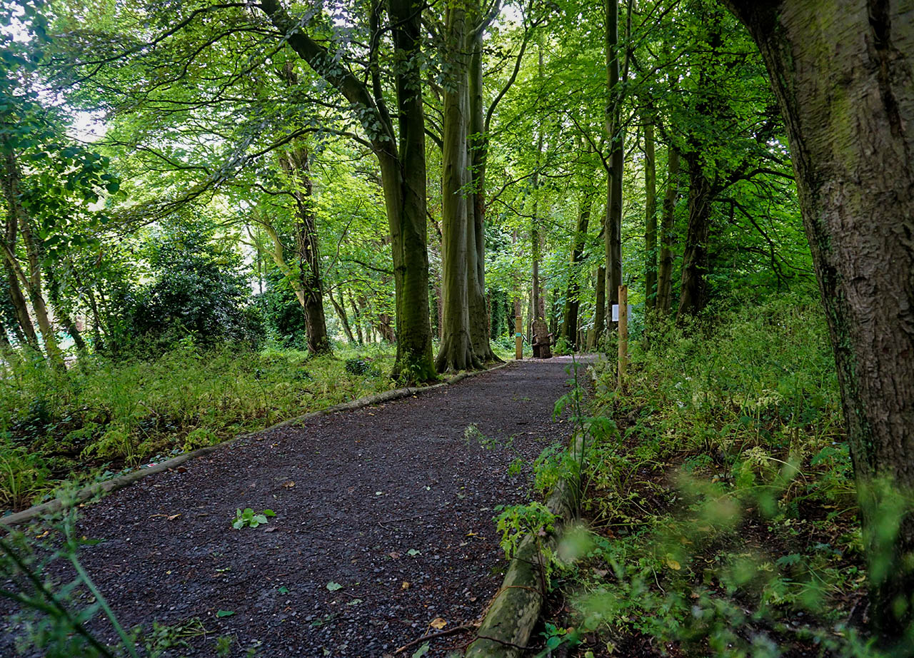 Forests and Woods at Stormont Park in Belfast Northern Ireland