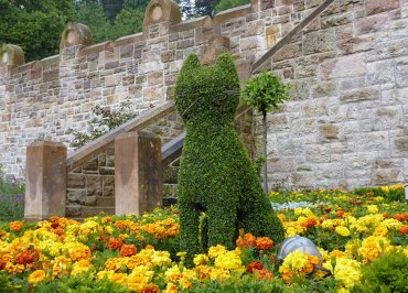 Cat Shaped Topiary Shrub Bush at Belfast Castle in Northern Ireland