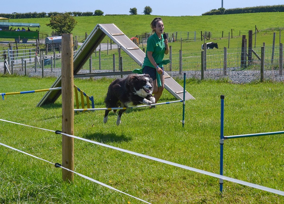 Dog Agility Obstacle Course Streamvale Open Farm Dundonald NI