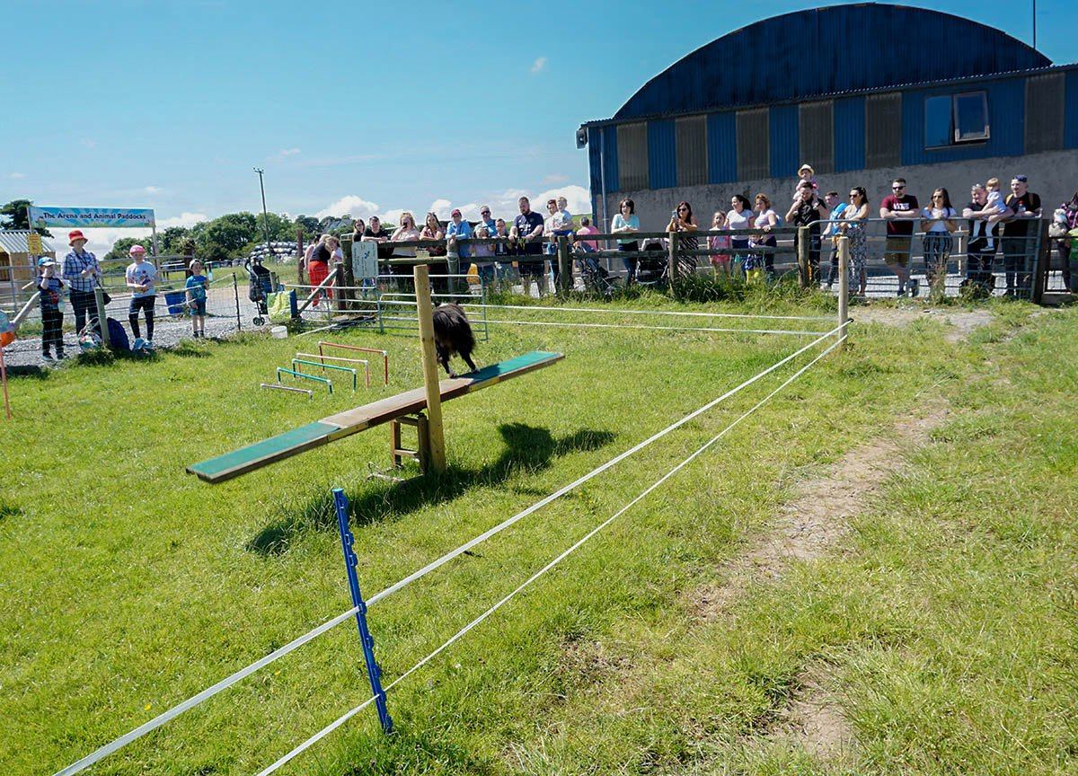 Sheepdog Obstacle Course Streamvale Open Farm Dundonald