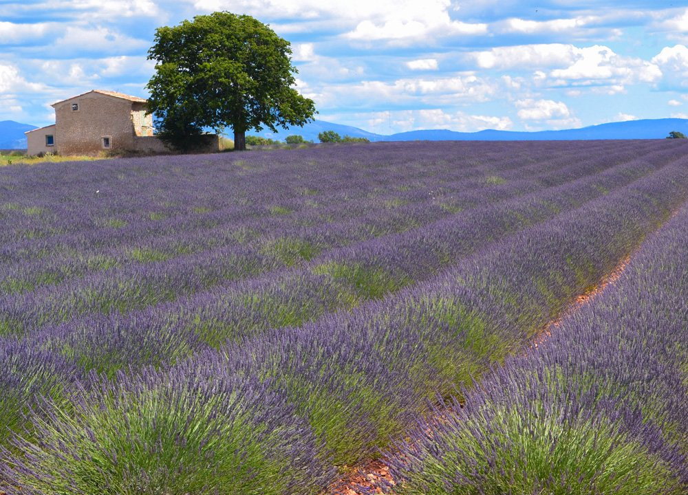 Lavender in Provence, Road Trip in Southern France and Borders June