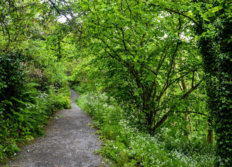 Stricklands Glen Trails from Upper Pond to Glenview Manor side