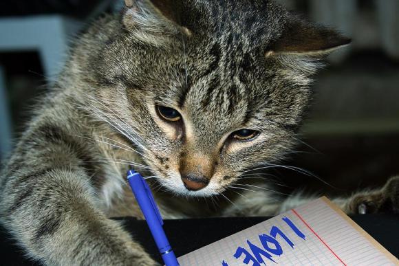 Cat-writing