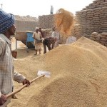 MARKFED advanced Rs 40.22 cr for paddy procurement: Gupta