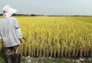 Merger of farm schemes