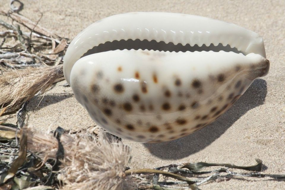cowrie shell to explain history of money