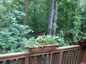 View of Rock Creek Park from the first-floor deck of the townhouse.