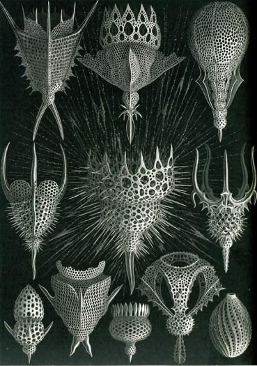 Haeckel, Ernst, Banque de l'image