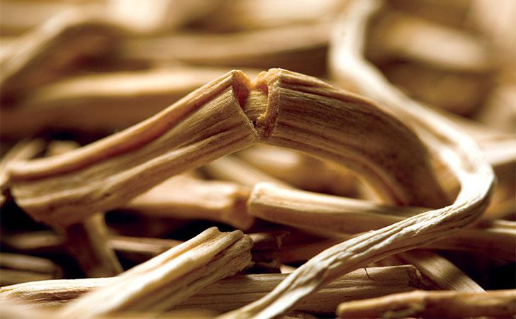 Shatavari Health Benefits  Ayurvedic Herbs  Banyan