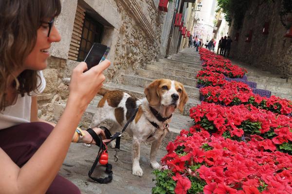 Le temps des fleurs à Ge%CC%81rone - blog Bar a%CC%80 Voyages