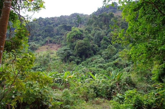 Nature Laos