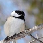 De nombreux animaux sauvages peuvent être observés autour des chutes de la Chaudière - Québec