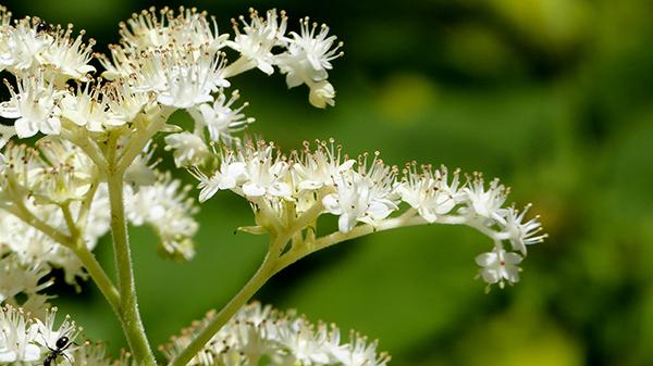 Fleurs au Domaine Joly de Lotbinière - Québec