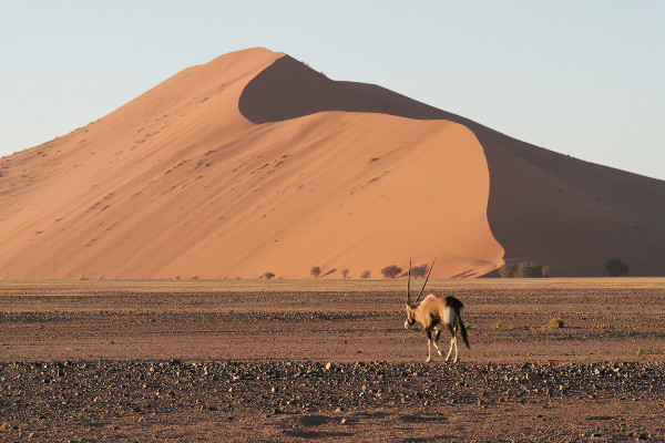 Oryx-Namibie-blog-bar-a-voyages