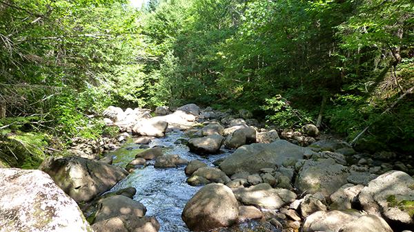 Balade près de la rivière Jacques Cartier - Québec