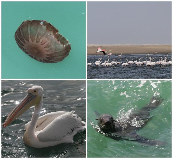 animaux-walvis-bay-namibie-blog-bar-a-voyages