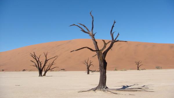sossulvei-namibie-blog-bar-a-voyages