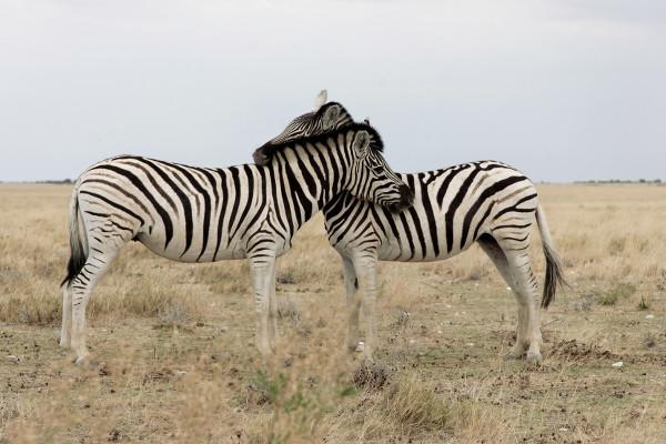 zebres-Namibie-blog-bar-a-voyages