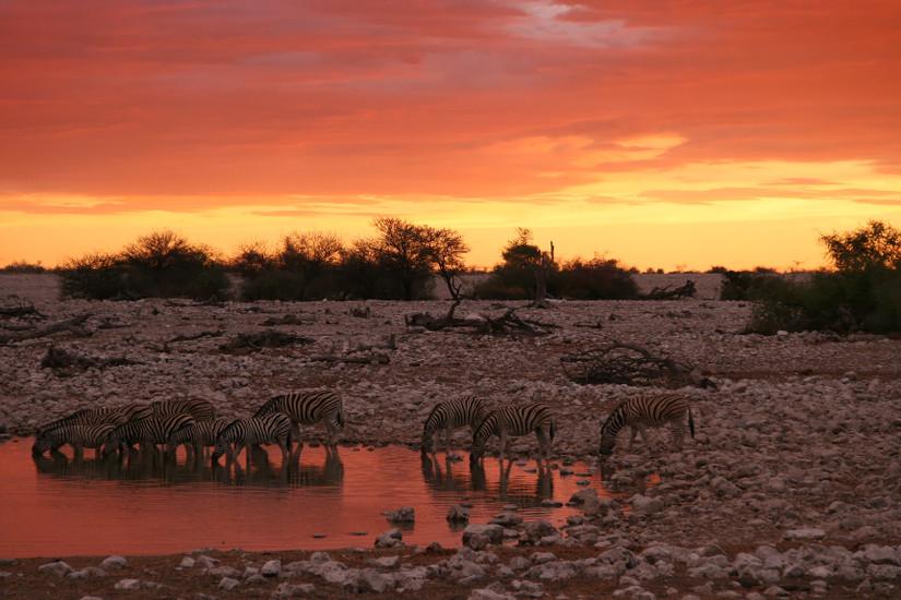 Zèbres en Namibie - blog Bar a Voyages