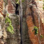 Cachette au creux d'un arbre niché dans la roche à la Serra da Capivara ©Felipe Mendes