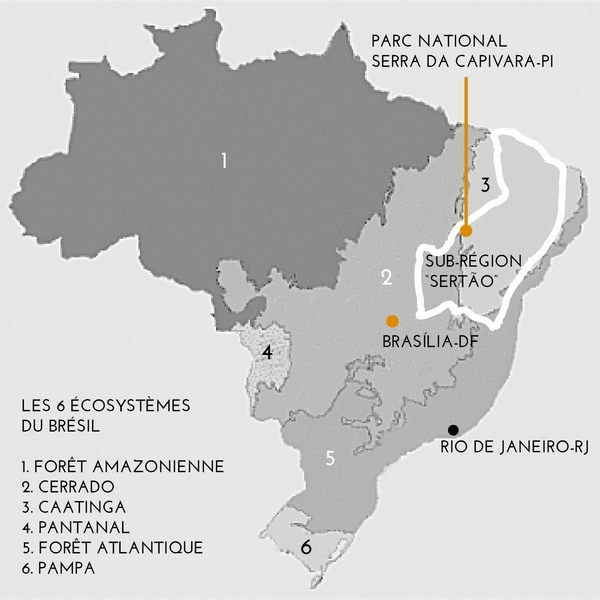 Les 6 écosystèmes du Brésil © Jatobá Design