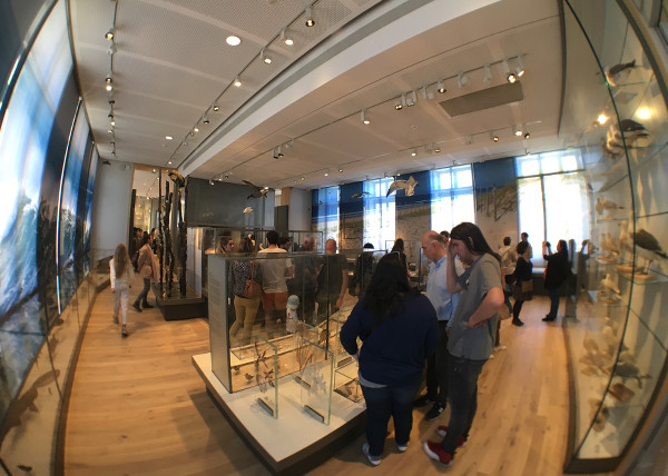 exposition sur le littoral atlantique au Muséum de Bordeaux