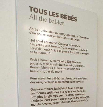 """Panneau de l'exposition """"tous les bébés"""" au Muséum de Bordeaux"""