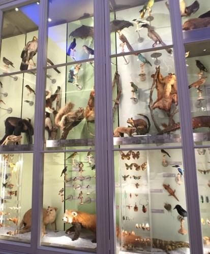 Animaux en vitrine au Muséum de Bordeaux