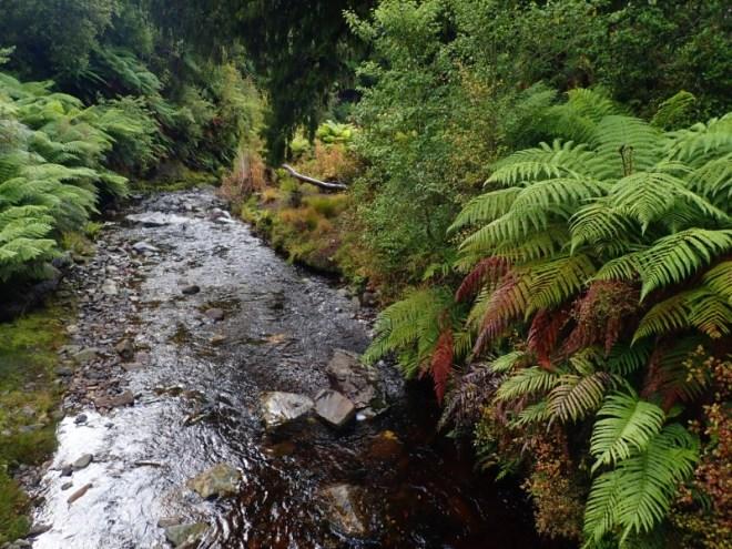 Rain forest en Nouvelle-Zélande