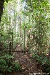 Brasil - Amazônia