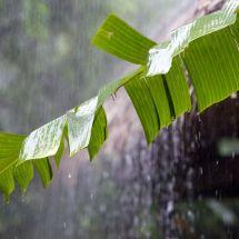 Prakiraan Cuaca di Bogor Hari ini