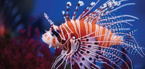 Marine Life Barbados Pocket Guide
