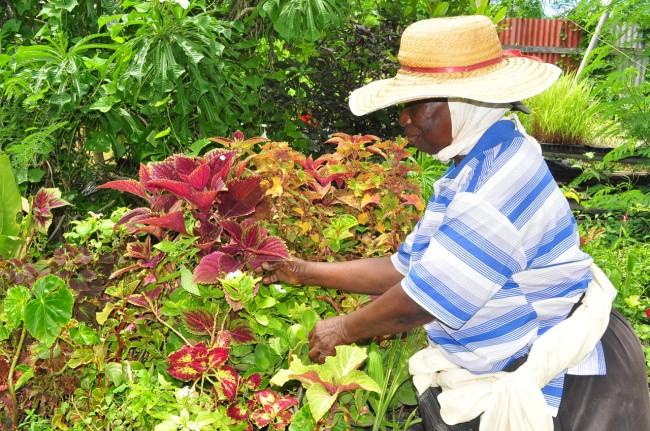 Farmer Eudene Edghill tending to her plants.